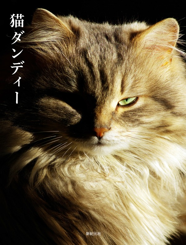 猫ダンディー